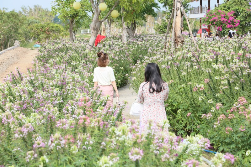 Làng hoa Sa Đéc: Hàng triệu giỏ hoa chuẩn bị ra chợ Tết - ảnh 2