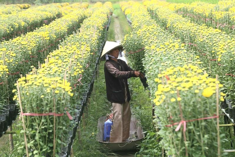 Làng hoa Sa Đéc: Hàng triệu giỏ hoa chuẩn bị ra chợ Tết - ảnh 12
