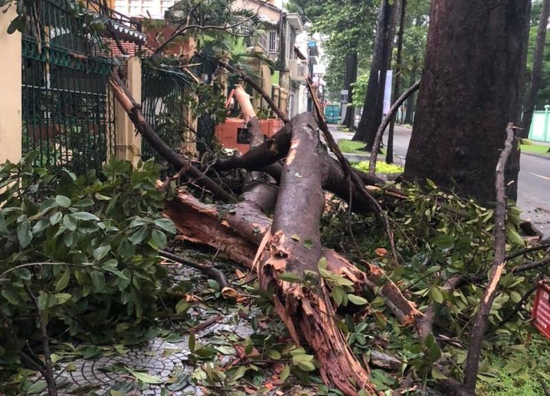 Cây gãy nhánh, đổ vào sân trường sau cơn mưa lớn ở quận 1 - ảnh 3