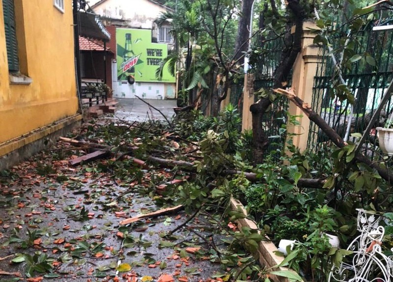 Cây gãy nhánh, đổ vào sân trường sau cơn mưa lớn ở quận 1 - ảnh 4