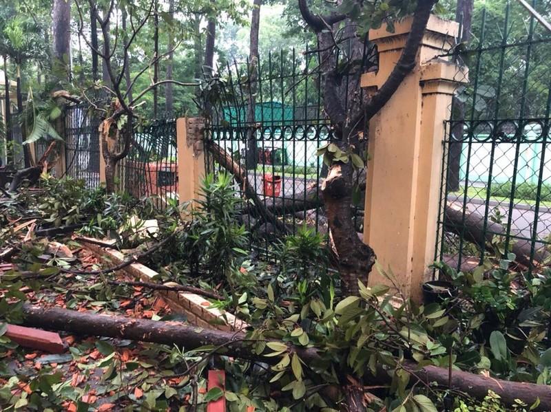 Cây gãy nhánh, đổ vào sân trường sau cơn mưa lớn ở quận 1 - ảnh 5