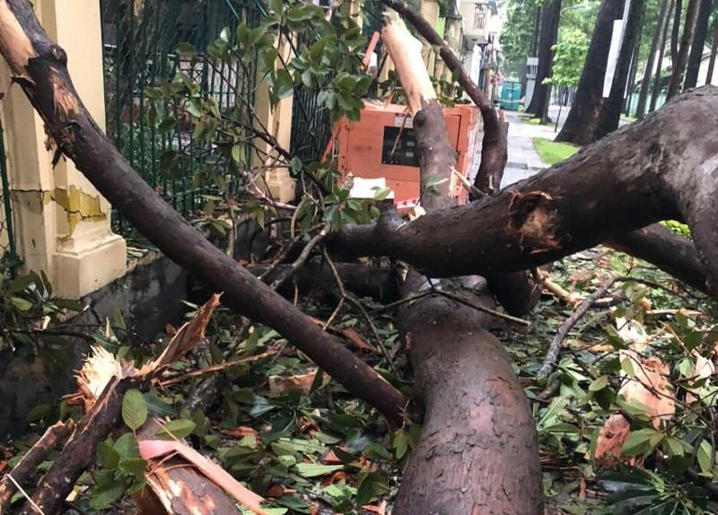 Cây gãy nhánh, đổ vào sân trường sau cơn mưa lớn ở quận 1 - ảnh 6