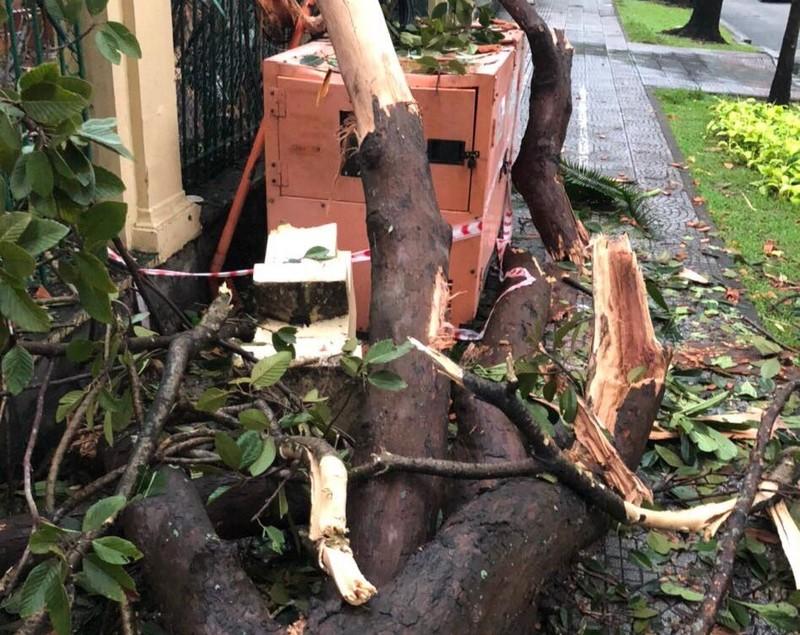 Cây gãy nhánh, đổ vào sân trường sau cơn mưa lớn ở quận 1 - ảnh 8
