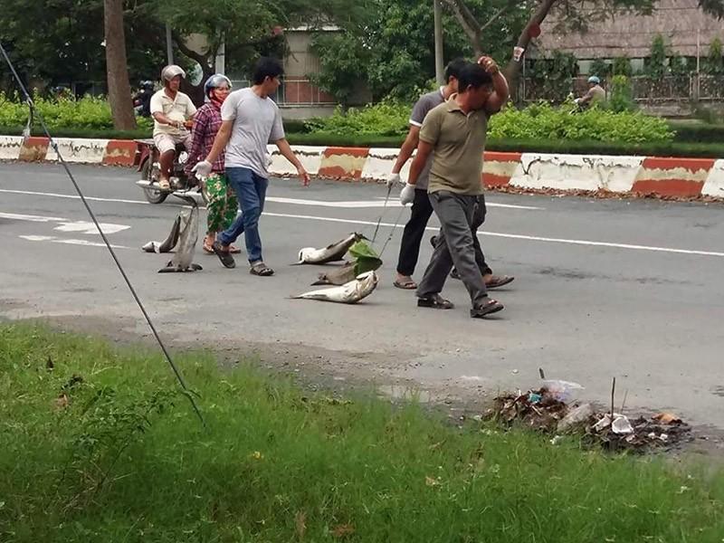 Dân kéo lê xác cá 'chặn' quốc lộ 51 - ảnh 3