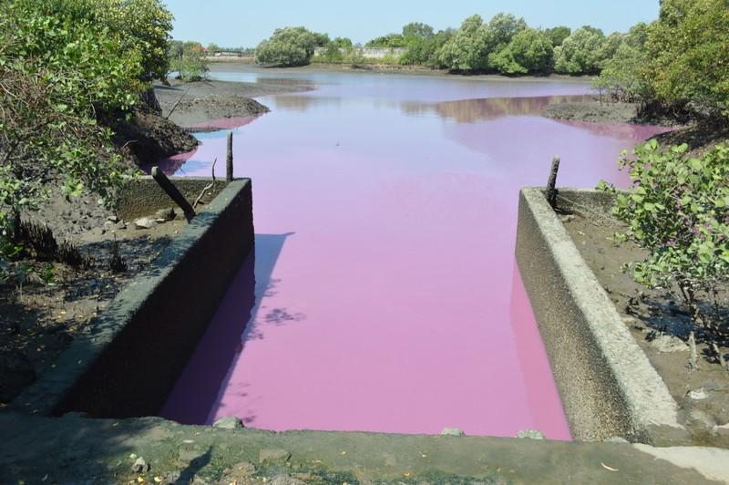 Bà Rịa-Vũng Tàu: 8.200 tỉ đồng xử lý ô nhiễm môi trường - ảnh 1