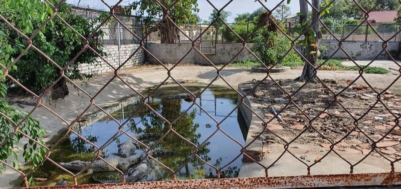 Vây bắt cá sấu trong hồ nước ở Vũng Tàu - ảnh 2
