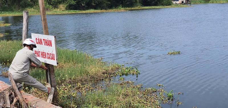 Vây bắt cá sấu trong hồ nước ở Vũng Tàu - ảnh 1
