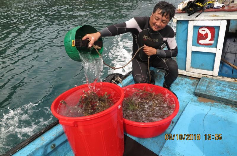 Bà Rịa-Vũng Tàu: Phục hồi thành công san hô khu Ramsar Côn Đảo - ảnh 2
