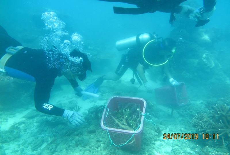 Bà Rịa-Vũng Tàu: Phục hồi thành công san hô khu Ramsar Côn Đảo - ảnh 1