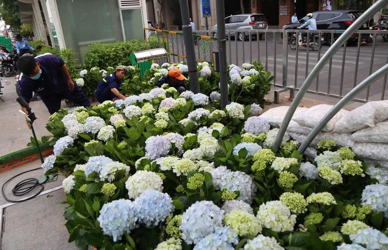 Cận cảnh đường hoa Nguyễn Huệ trước ngày khai mạc - ảnh 16