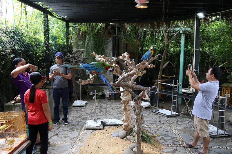 Trải nghiệm cà phê với vẹt 5.000 USD ở Sài Gòn - ảnh 1