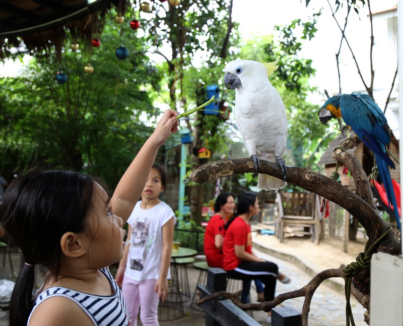 Trải nghiệm cà phê với vẹt 5.000 USD ở Sài Gòn - ảnh 8