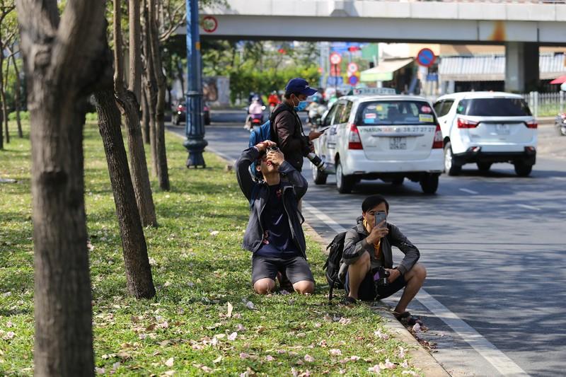 Kèn hồng nở sớm, giới trẻ đội nắng tìm chỗ check-in ở SG - ảnh 8