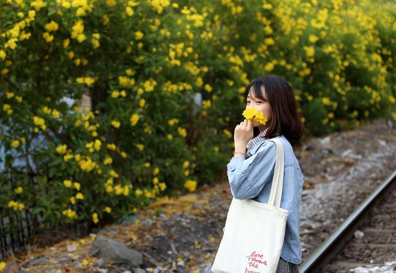 Hoa huỳnh liên vào mùa nở rộ dọc đường tàu Sài Gòn - ảnh 10