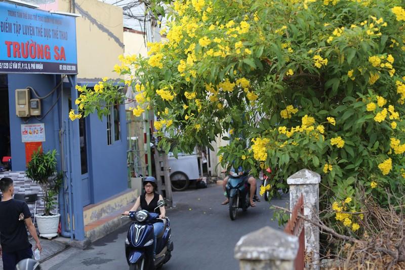 Hoa huỳnh liên vào mùa nở rộ dọc đường tàu Sài Gòn - ảnh 11