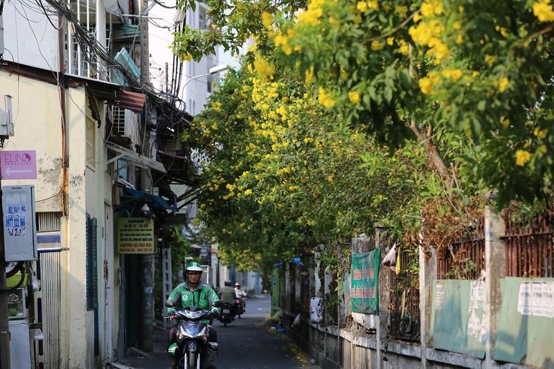 Hoa huỳnh liên vào mùa nở rộ dọc đường tàu Sài Gòn - ảnh 1