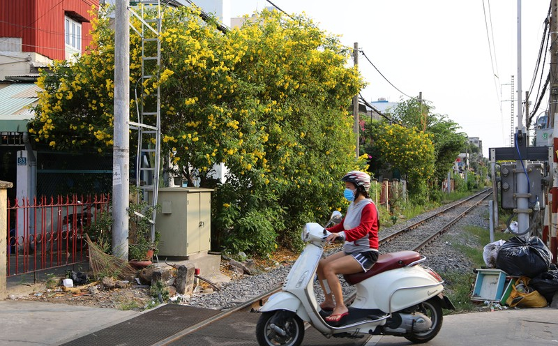 Hoa huỳnh liên vào mùa nở rộ dọc đường tàu Sài Gòn - ảnh 4