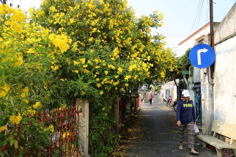 Hoa huỳnh liên vào mùa nở rộ dọc đường tàu Sài Gòn - ảnh 6
