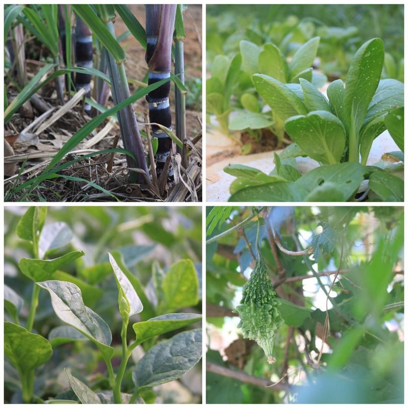 Ngắm vườn hoa, rau củ quả trong trường đại học ở TP.HCM - ảnh 3