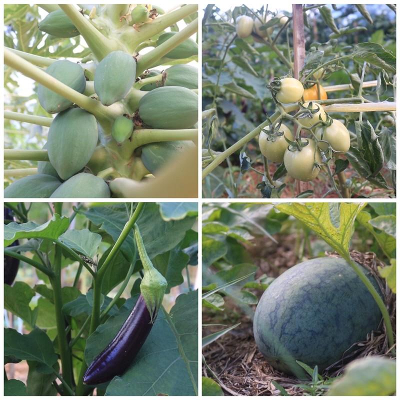 Ngắm vườn hoa, rau củ quả trong trường đại học ở TP.HCM - ảnh 4
