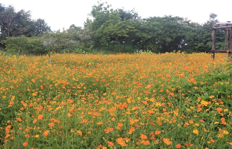 Ngắm vườn hoa, rau củ quả trong trường đại học ở TP.HCM - ảnh 1