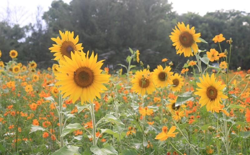Ngắm vườn hoa, rau củ quả trong trường đại học ở TP.HCM - ảnh 2