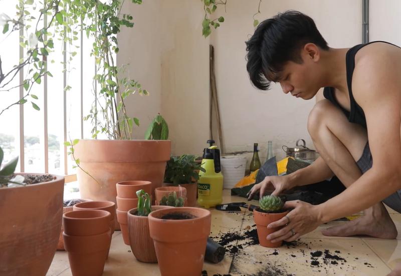 Ở nhà mùa dịch: Biến ban công thành đầm sen thơm ngát - ảnh 4
