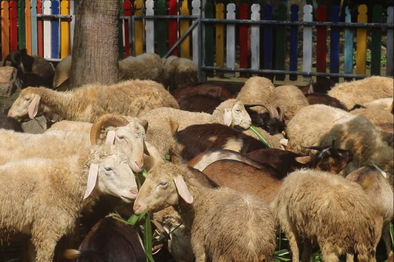 Những người '3 tại chỗ' tại Thảo Cầm Viên: Để động vật không bị đói - ảnh 2