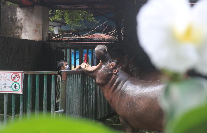 Những người '3 tại chỗ' tại Thảo Cầm Viên: Để động vật không bị đói - ảnh 4