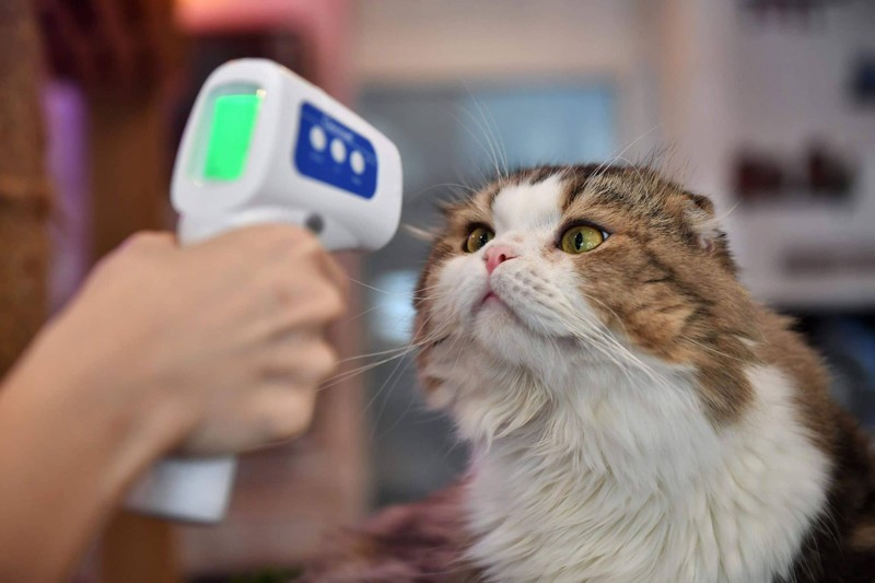 Nguy cơ con người truyền virus SARS-CoV-2 cho chó mèo cao hơn là ngược lại - ảnh 1