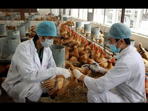 Thủ tướng chỉ đạo phòng, chống dịch cúm H5N1  - ảnh 1