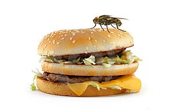 Điều gì xảy ra khi ruồi đậu vào thức ăn?  - ảnh 1