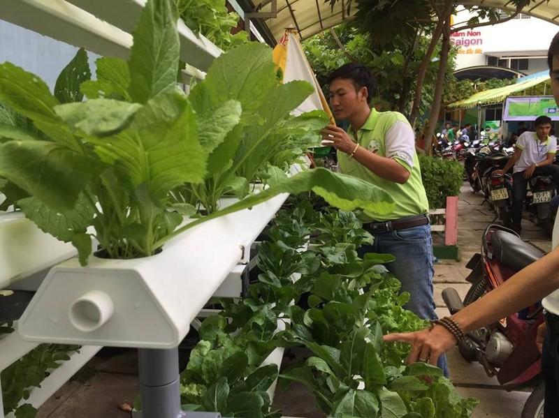 Thủy canh và giá thể - xu hướng nông nghiệp tương lai - ảnh 1