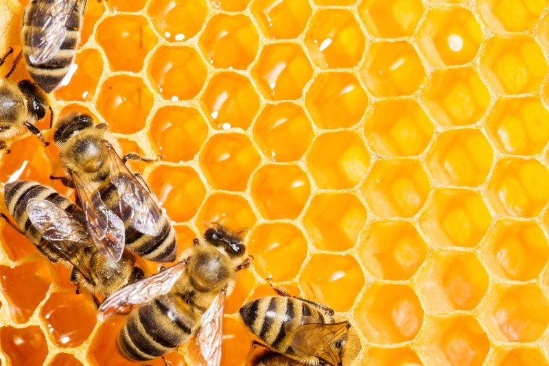 Keo ong có khả năng chống ung thư - ảnh 1