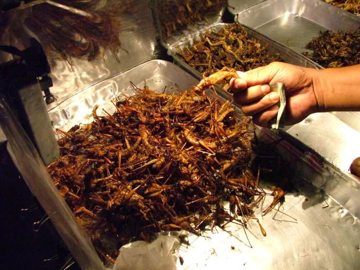 6 loại côn trùng trở thành món ăn đặc sản - ảnh 4