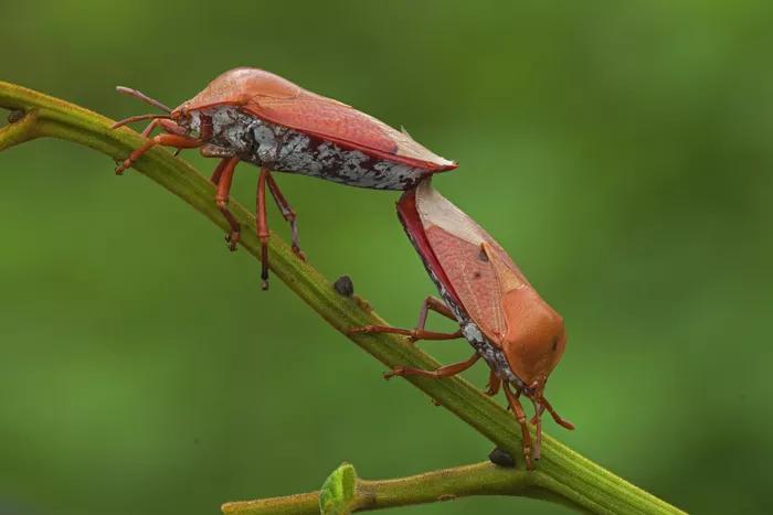 6 loại côn trùng trở thành món ăn đặc sản - ảnh 5