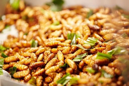 6 loại côn trùng trở thành món ăn đặc sản - ảnh 3