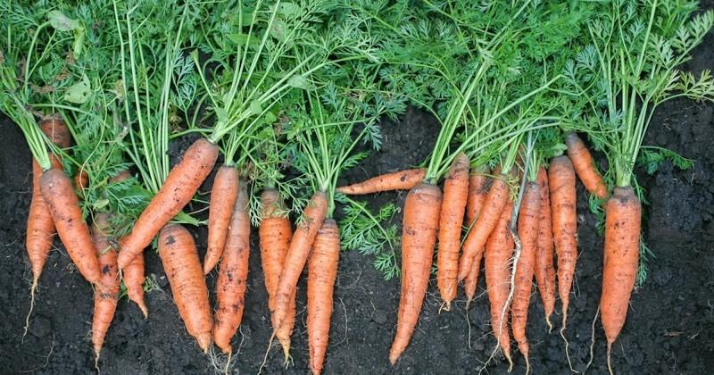 4 loại rau bổ dưỡng, phát triển nhanh dễ trồng trong vườn nhà - ảnh 2
