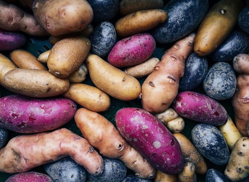 Những loại thực phẩm giá rẻ có lợi cho sức khỏe - ảnh 3