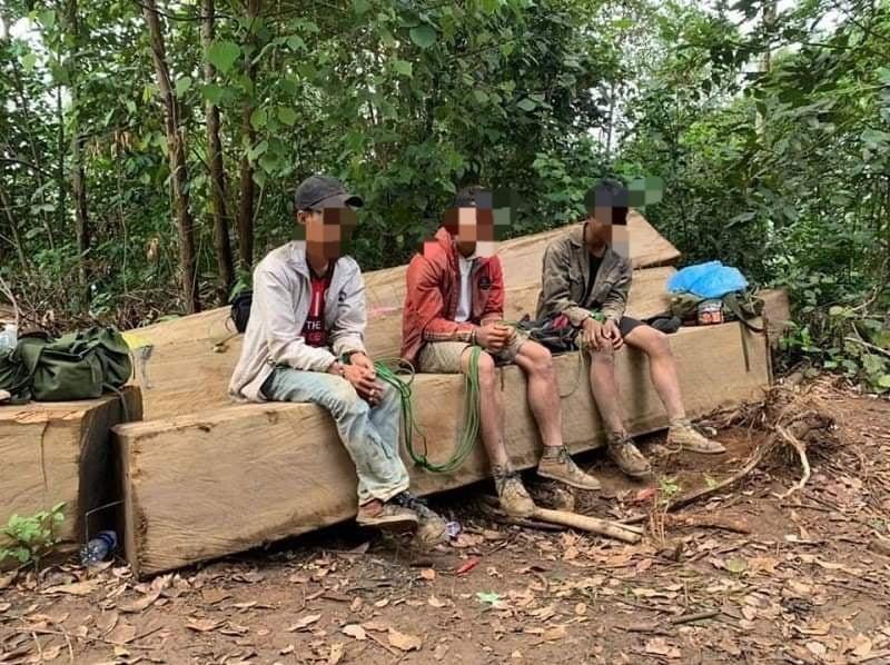 Bắt nhóm người khai thác gỗ trái phép - ảnh 1