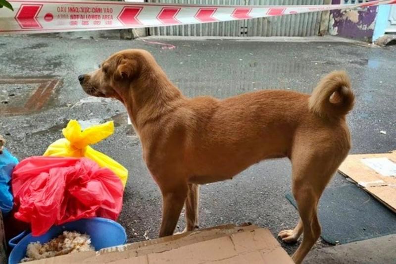 Cảm động chuyện F0 gửi chó cưng nhờ người chăm giúp khi đi cách ly   - ảnh 2