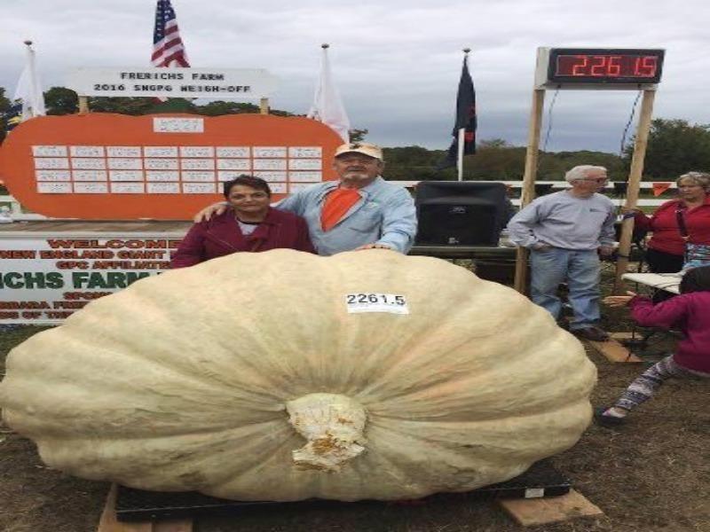 bí ngô nặng hơn 1 tấn