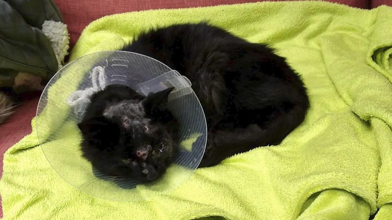 Chú mèo sống sót kỳ diệu dù bị bắn trúng 18 viên đạn - ảnh 2