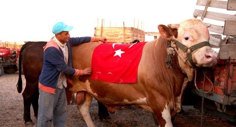 Thổ Nhĩ Kỳ: Lấy tên S-400 để đặt cho con bò hiến tế - ảnh 1
