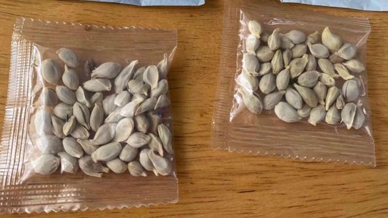 Trồng thử hạt giống bí ẩn từ Trung Quốc: Cây 'mọc điên loạn' - ảnh 1