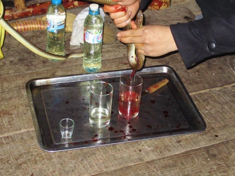 Uống rượu pha máu động vật liệu có an toàn? - ảnh 1