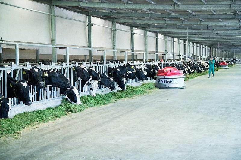 Dấu ấn phát triển bò sữa công nghệ cao của Vinamilk - ảnh 2