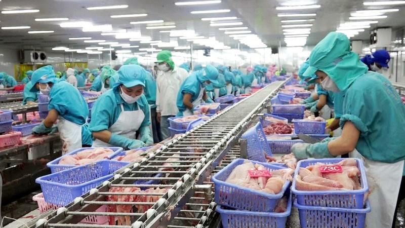 Cần Thơ: Vừa chống dịch, vừa phát triển kinh tế - ảnh 2