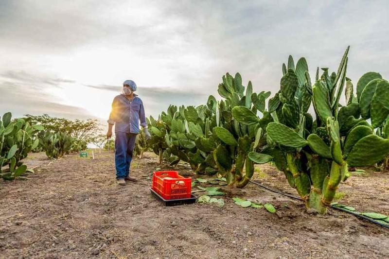 Bên trong nông trại hữu cơ làm nên những sản phẩm Amway chất lượng - ảnh 2