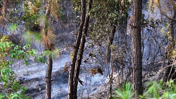 Rừng thông vẫn cháy dữ dội, 500 người dập lửa xuyên đêm - ảnh 1